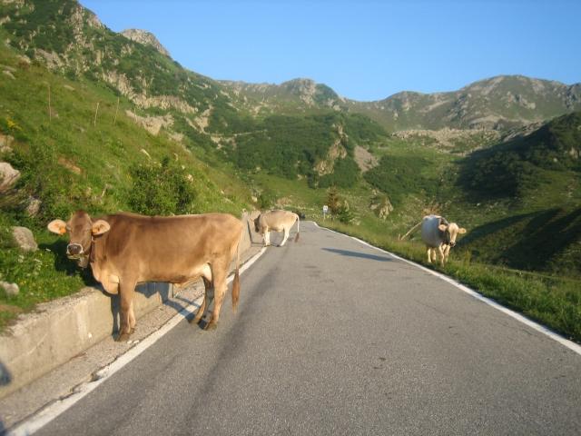 Paßstraße zum San Marco (1.992 m), kurz vor oben (nur noch drei Kilometer