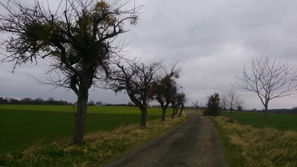 Kleinod: Alte Obstbaumallee mit Mistelbewuchs