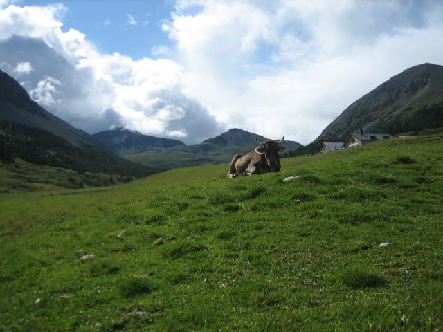 An der Alp Astras (2.135 m)