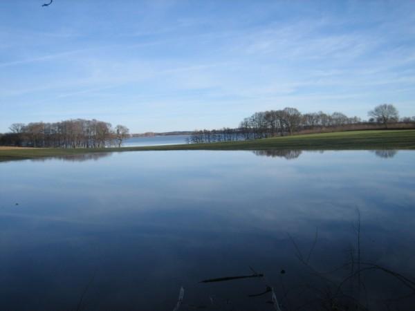 Vorn: überflutetes Feld, hinten: Windebyer Noor