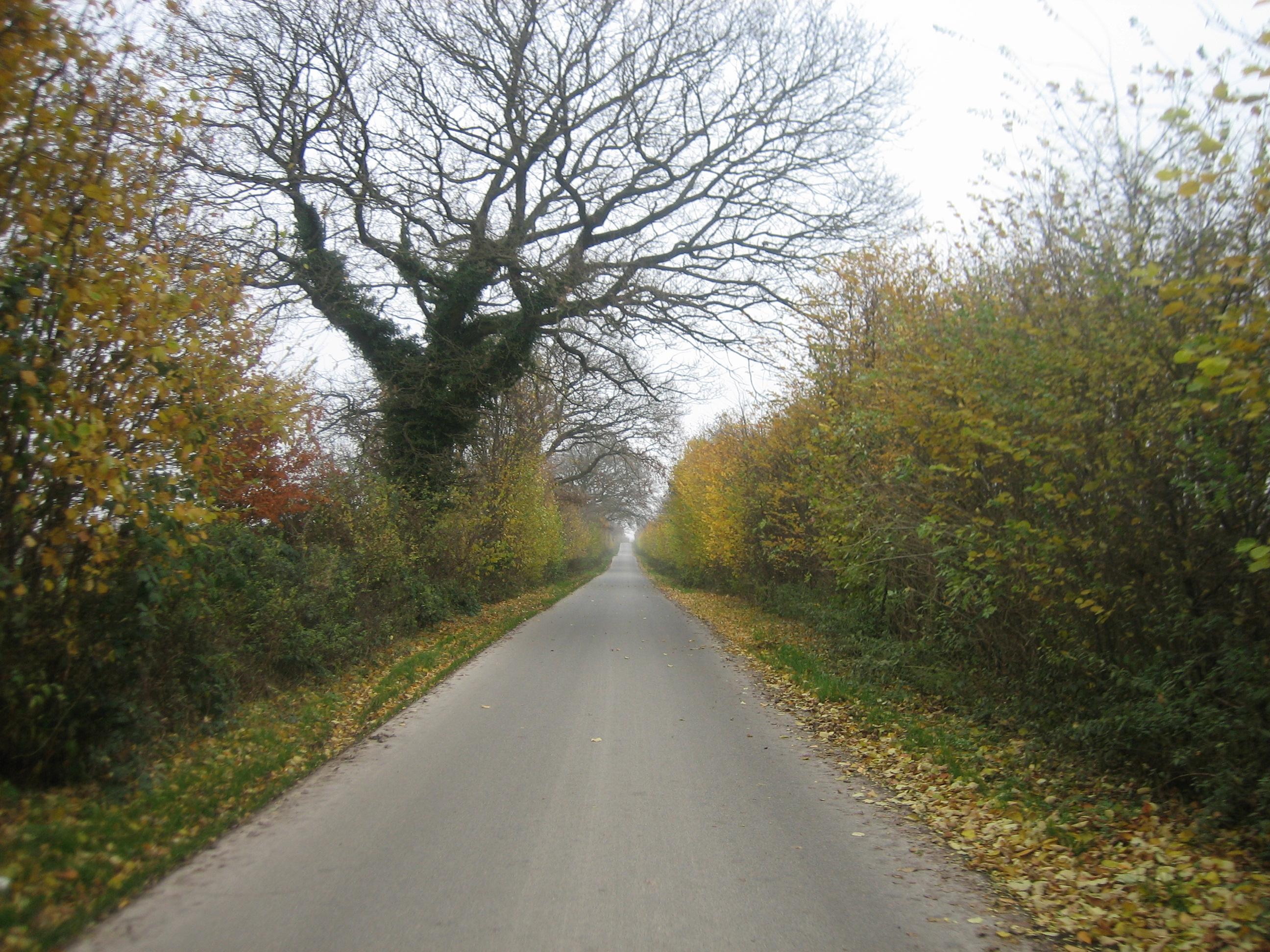 Herbststimmung in der Nähe von Bovenau