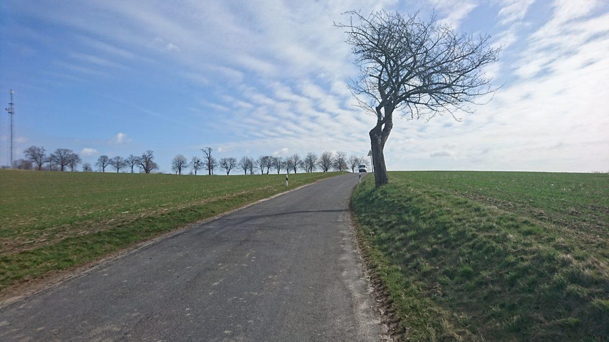 Lindenallee am Schellenberg (206 m) bei Weicha (Stadt Weißenberg).
