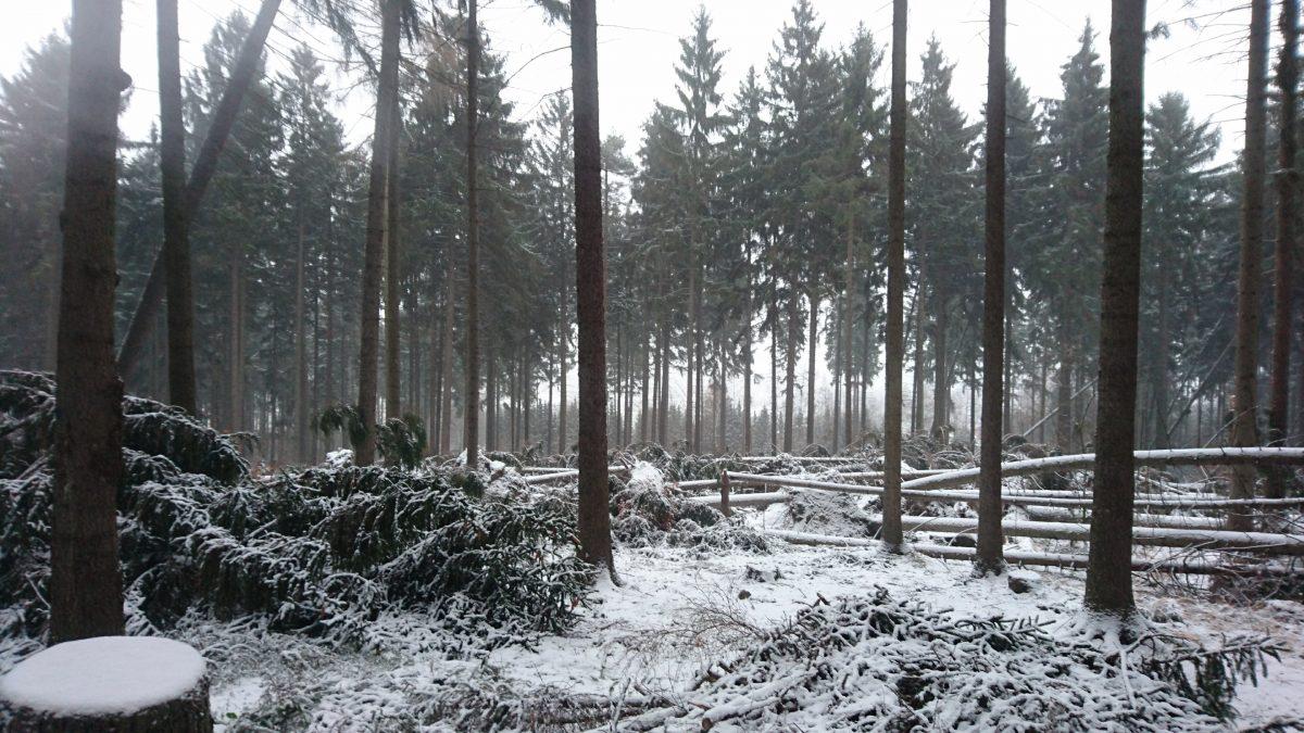 Von »Herwart« gestaltete Waldfläche am Nordhang des Mönchswalder Berges.